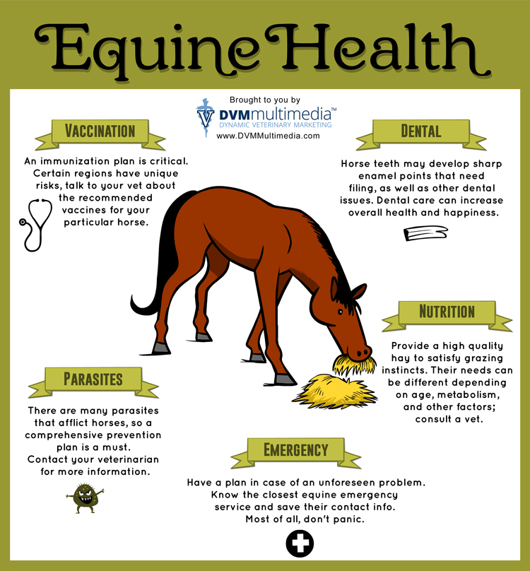 General Equine Health